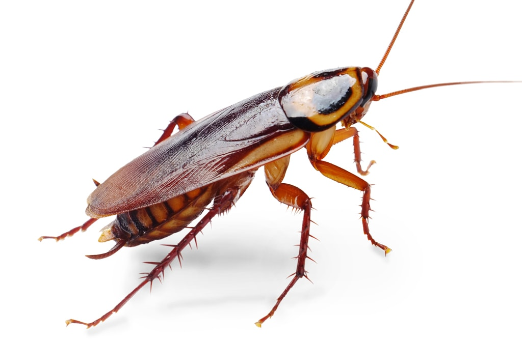 All About Roaches Diy Bug Control